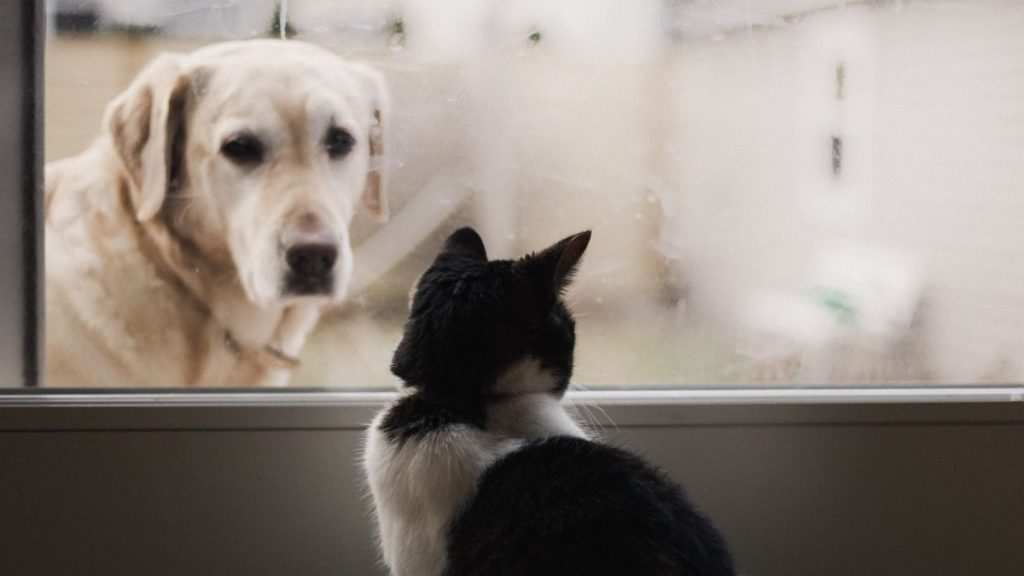 En Colombia Proponen Ley De Permiso Laboral En Caso De Muerte De Mascotas
