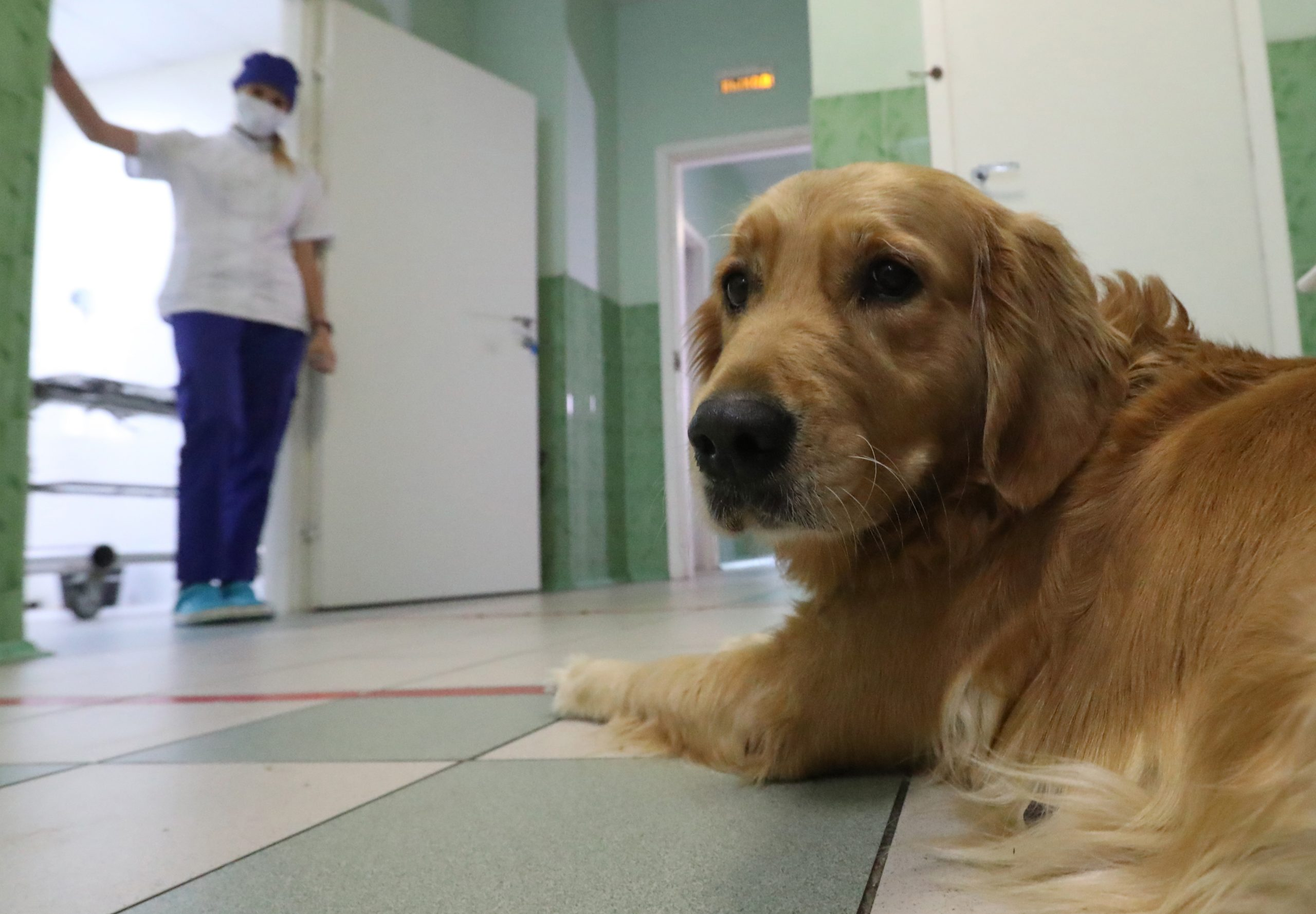 Microchipping Pets In Moscow