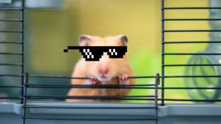 Hamster Criptomonedas Mr Goxx